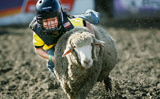 Mutton Busting contest at the Puyallup Washington State Fair
